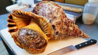 Video Japanese Street Food - GIANT TRUMPET CONCH Sashimi Okinawa Seafood Japan MP3, 3GP, MP4, WEBM, AVI, FLV Juni 2019