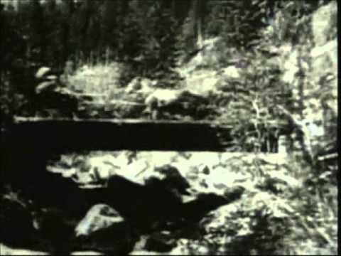 O Gato e o Diabo - James Joyce / F.W. Murnau