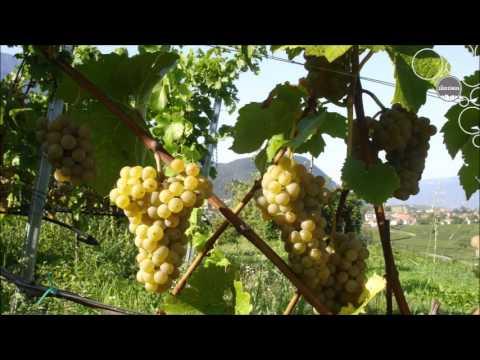 Weinland Südtirol - PIWI