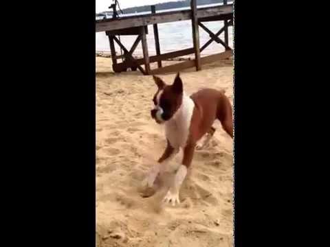 Luda reakcija psa kad proba limun – da pukneš od smeha