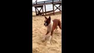 Dog Eats Lemon and goes CRAZY
