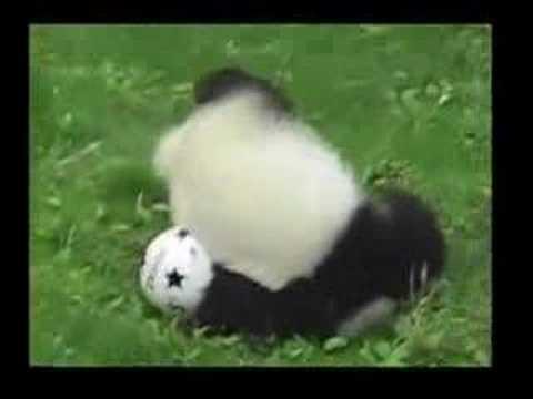 「これは見分けがつかない!サッカーボールで遊ぶパンダ」のイメージ