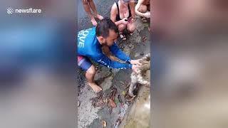 Gdy spotkasz na drodze leniwca pomóż mu! Na pewno Ci się odwdzięczy za to :D