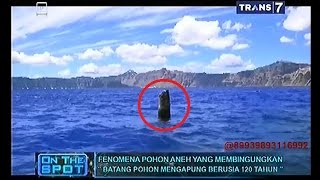 Download Video On The Spot - Fenomena Pohon Aneh yang Membingungkan MP3 3GP MP4