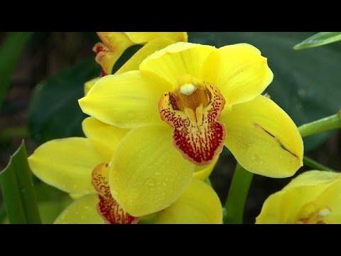 Orchideenmeer im Botanischen Garten von New York
