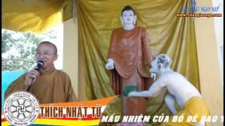 Hành hương Ấn Độ (2010) - Phần 5: Sự mầu nhiệm của Bồ-đề Đạo Tràng - TT. Thích Nhật Từ
