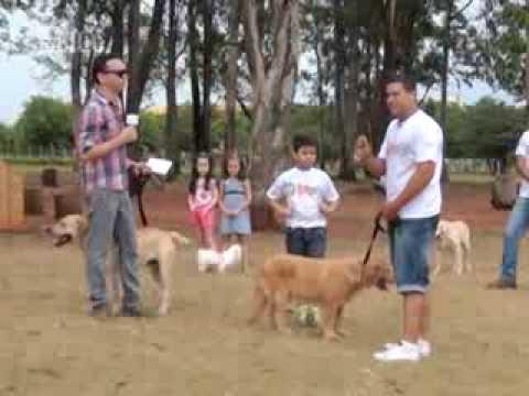 Saiba como adestrar seu cão em casa