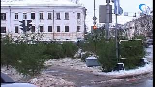 В Новгородской области состоялись аукционы на заключение договоров  купли-продажи елок для новогодних праздников