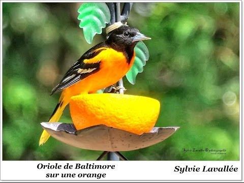 Nourriture diverse pour oiseaux sauvages
