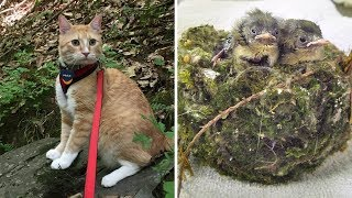 A Cat Presented His Family With An Intact Bird's Nest With Three Tiny Chicks Still Inside It by Did You Know Animals?