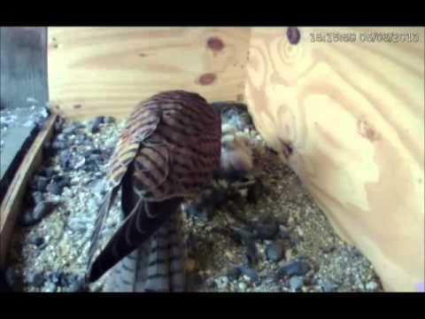 Poštolky Třeboň - pozor, vyletí ptáček!