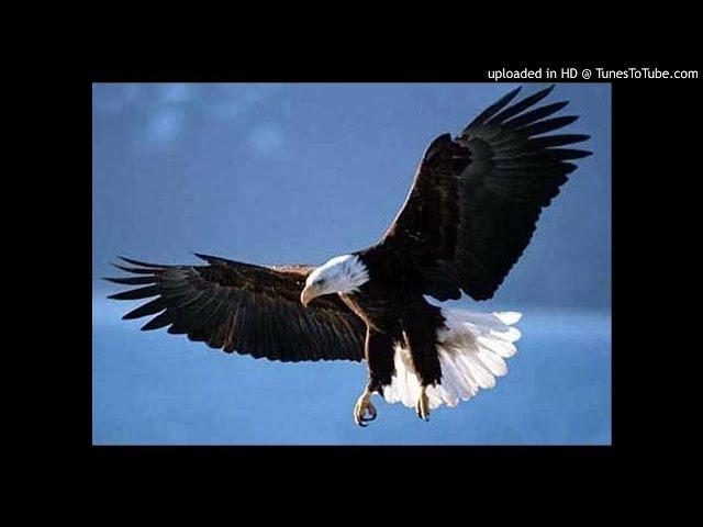 download suara kicau burung elang mp3fordfiesta