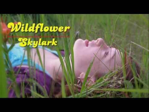 Wildflower - Skylark  [HD]