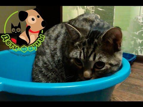 кошка не ходит в лоток по маленькому что делать