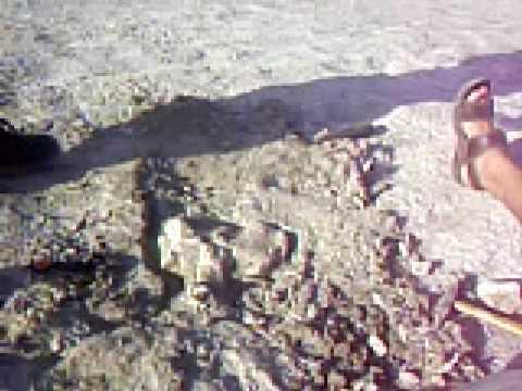 Lagoa Salgada - Areial - Paraíba - Sítio Paleontológico - LABAP - UEPB