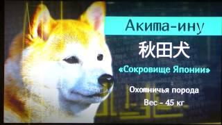 Собака Владимира Путина