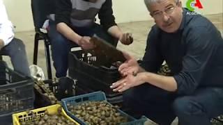 Les escargots rapportent 3 millions de dollars chaque année à l'économie algérienne.