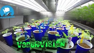 A Vegetative State, Cannabis Grow Op! by VaderVision