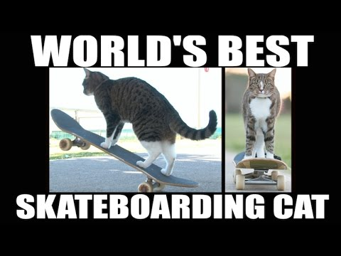 WATCH: Kitty goes skateboarding... and is way better than me