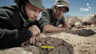 Nonton Wild Atacama Desert Film Subtitle Indonesia Streaming Movie Download