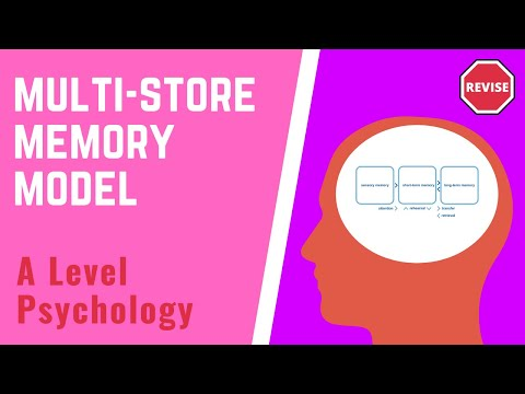 As Psychology - The Multi-Store Memory Model