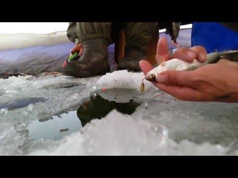 зимния рыбалка видео на чебака