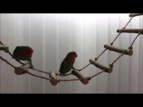 Fabriquer Maisons/Perchoirs/Jouets destructibles pour oiseaux-205-