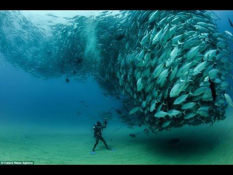 Câu cá ngừ đại dương chưa bao giờ dễ dàng đến thế...đi biển gặp đàn cá như này thì giàu to!