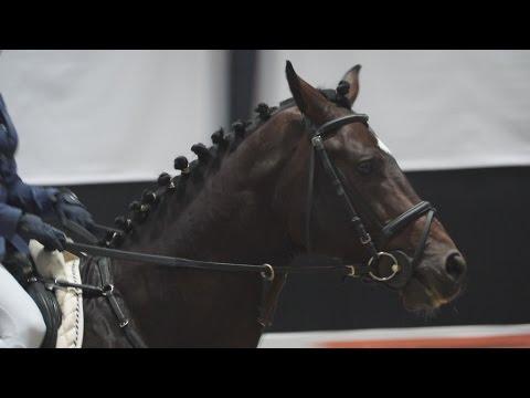 Тракененская лошадь на выставке «Эквирос'2016»