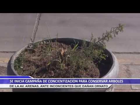 SE INICIA CAMPAÑA DE CONCIENTIZACIÓN PARA CONSERVAR ARBOLES DE LA AV. ARENAS