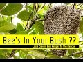 Bees In Your Bush ?  Andrew Preston - Bees Nests Removed Skipton Keighley Areas