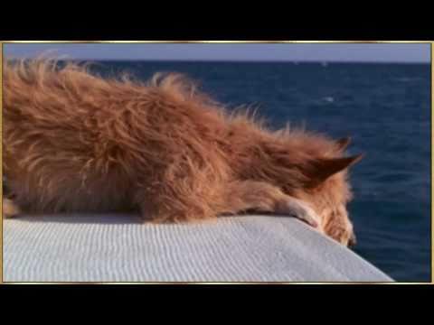 cane salvato da un delfino - toccante ed emozionante video