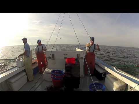Locals Seafood – NC Shrimp Harvest