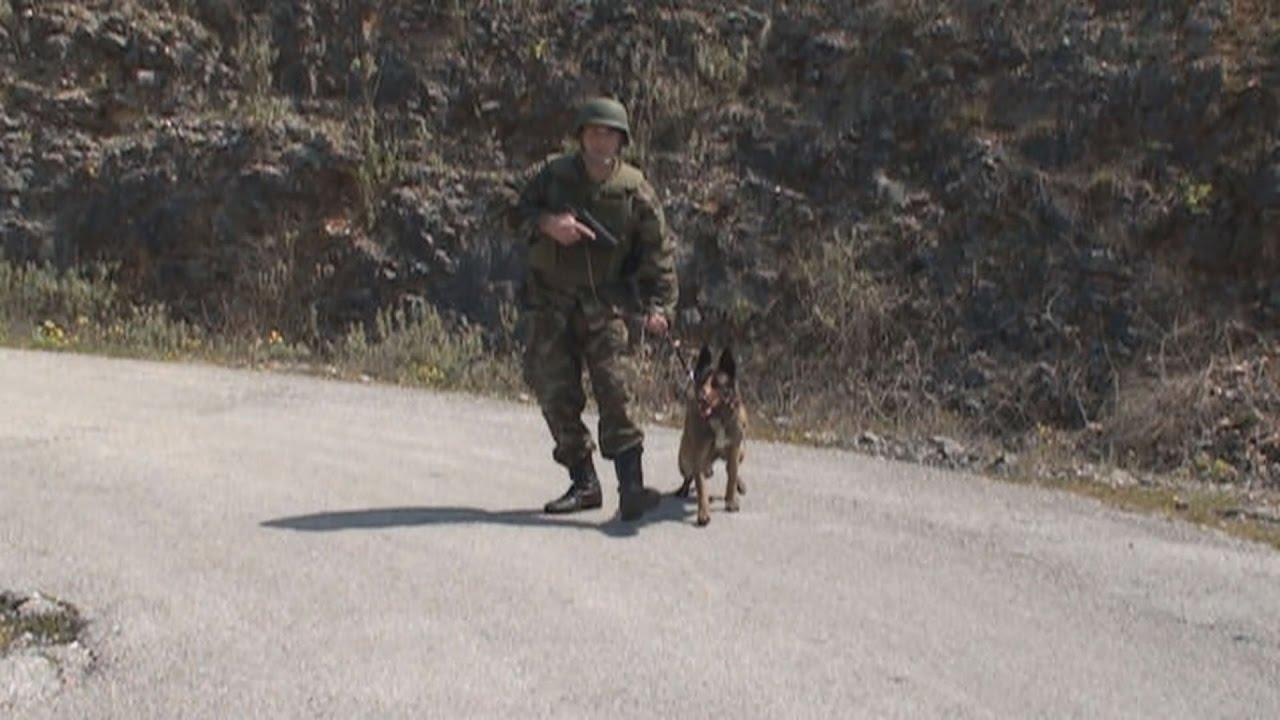 Εκπαίδευση στρατιωτικών σκύλων