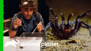 Coyote Helps Create A Life-Saving Serum From A Spider's Venom | Coyote Peterson: Brave The Wild by Animal Planet