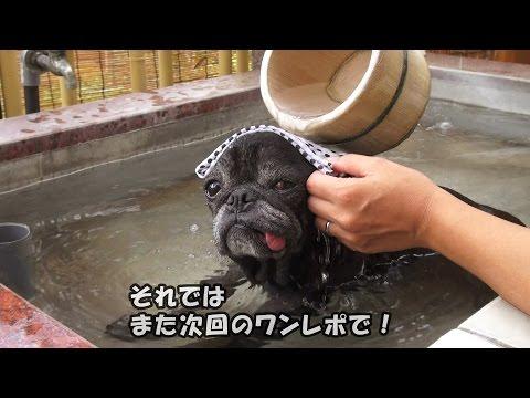 黒パグナイトの神奈川 箱根湯めぐりの旅~温泉の守護社とシチュ …