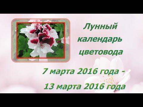 Лунный календарь 13 марта