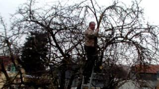 #302 Schneiden im Garten 2011 - Apfelhochstamm 5v6