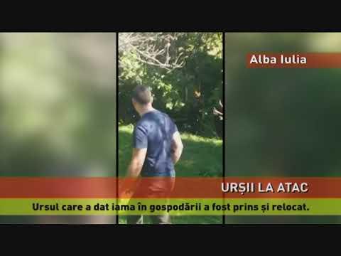 Un bărbat a fost atacat de un urs, în Predeal. Ursul care ataca gospodăriile de lângă Alba Iulia, prins
