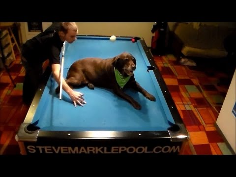 Steve Markle Amazing Pool Trick Shots