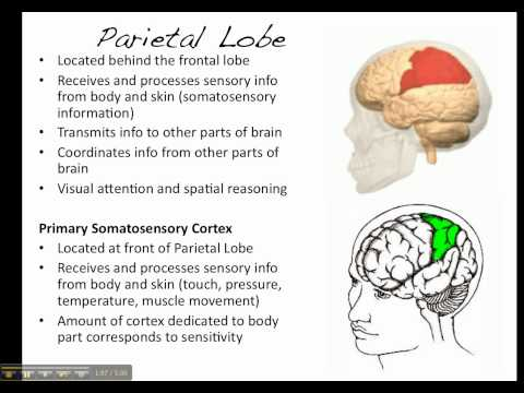Damage of the brain mental processes and behavior