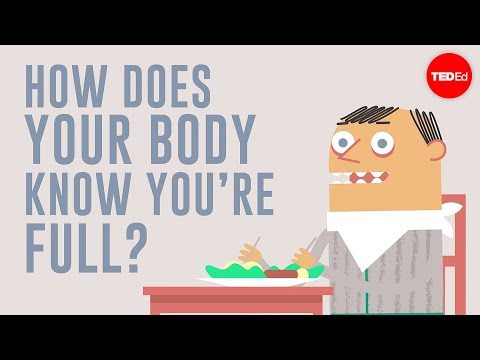 Download How does your body know you're full? - Hilary Coller HD Mp4 3GP Video and MP3