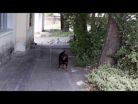 Video - Κιλκίς: Επιθέσεις από αδέσποτους σκύλους σε ασθενείς και προσωπικό νοσοκομείου