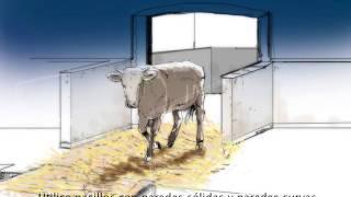 Buenas y mejores prácticas en el transporte de ganado