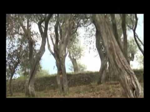 La filiera dell'olio extravergine di oliva - 2