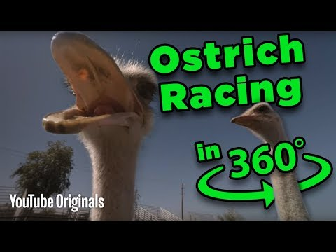 Beware the BEAK! Ostrich Racing 360 - Game Lab 360 Video