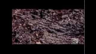 Ancient Florida Bog Mummies