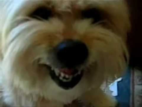 Most Hillariously Funny Dog Video Clips