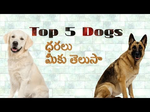 Top 5 dogs prices in India in Telugu | Taju logics