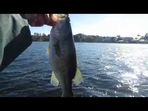 FLORIDA BASS FISHING WITH THE BASS COLLEGE
